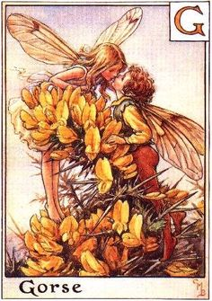 mari barker, cice mari, fantasi, gors fairi, alphabet, flowers, fairy art, flower fairies, cicely mary barker