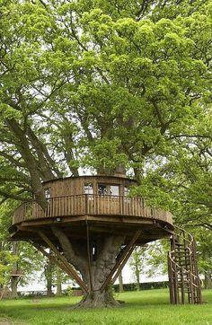 Treehouse. tree house decor, three house, sweet trees, dream, tree houses, treehouse, backyard, guest houses, kid