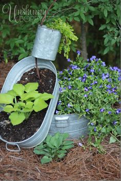 Stacked Galvanized Bucket Planters... spilling planter with hosta and creeping jenny  www.unskinnyboppy.com #gardening  #containergardening bucket planter, veggie gardens, galvan tub, galvanized buckets, outside decorations, southern homes, flower gardening, container gardening, tub planter
