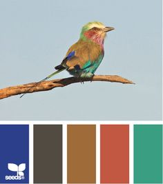 ✮ Feathered Hues - Fun Bright Palette