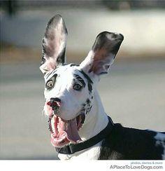 Cuteness Overload - Animal Ears on Pinterest | Ears ...