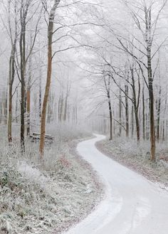 snow road in the woods