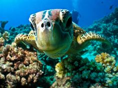 The good news is once they're adults, basically nothing kills turtles. | Definitive Proof That Turtles Are The Most Kick-Arse Sea Creatures Ever