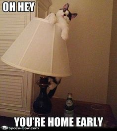 lamps, funny animals, funny animal pictures, silly cats, funny pictures, funny cats, parties, funni, homes