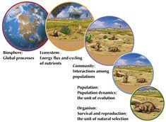 levels of ecology.jpg 612×448 pixels