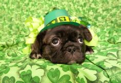 Here's a little St. Patty's Day cheer to brighten up your Monday morning! #HappyStPatricksDay