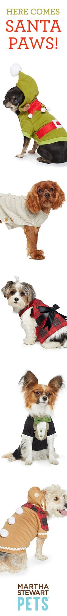 Adorn your furry friends in elegant attire this season.