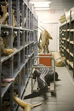 natural history back room