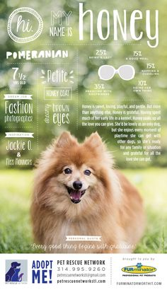 Hi. My name is Honey. I'm looking for my forever home. #pet #adoption #poster #dog #design #infographics