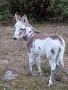 donkeys -