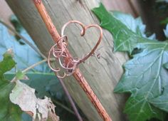 Hearts in nature~gorgeous curly heart on my grapevine.