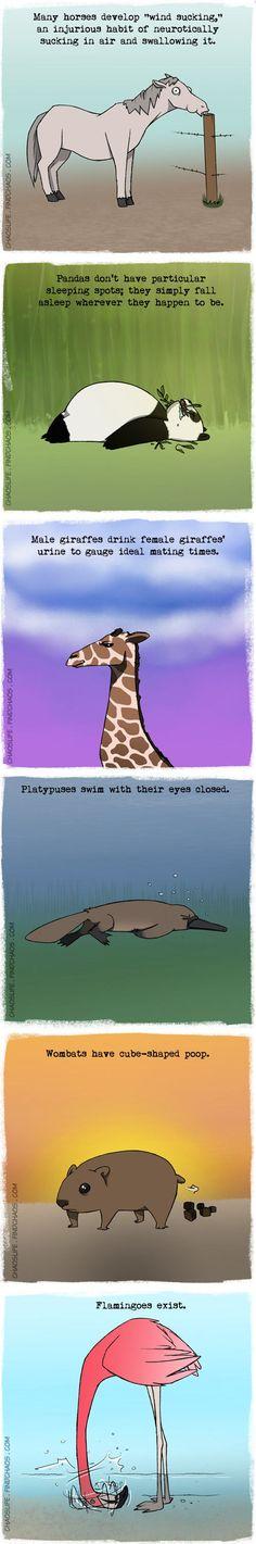 Weird facts about animals…