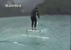 Waterbird.   https://www.facebook.com/video.php?v=10152186771116006