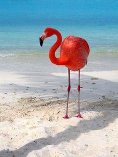 Aruba Island, Carribean