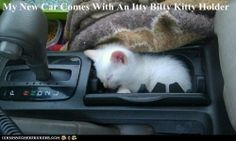 hiding places, kitty cats, cups, animal funnies, funny cats, cat naps, kittens, cat stuff, sleep tight