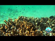 Reef Check with Jeremy Flores - Quiksilver Foundation  #sustainable #development