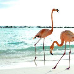 Mingos on the beach.