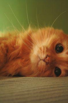 Ginger Luv