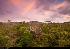 Dawn in the rainforest of Soberania National Park, Republic of Panama. © Oyvind Martinsen / Alamy