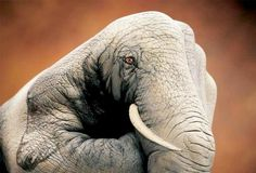 A hand painted as an Elephant which is coined as a 'Handimal' by it's artist Guido Daniele.