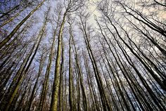 Young Trees... by TRM-photography.co.uk, via Flickr