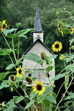 Birdhouse and sunflowers
