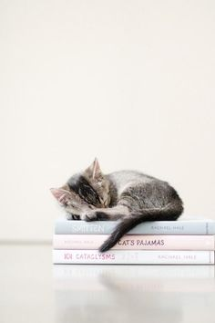 Summer reading has begun. #Kitten