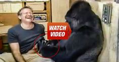 Robin Williams Talks To A Gorilla, You Won't Believe What She Asks Him To Do! I Can't Stop Laughing!