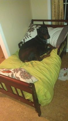 Took a toddler bed and mattress that was for sale for 20.00$ and made a dog bed for my large breed doberman! Cheap and looks better then a dog bed on the floor!