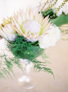 King Protea... native to South Africa... photo by Jen Huang