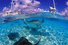 Grand Caymen  - Stingray City! This is one those experiences I'm glad that I did, but I'm not sure I'll do it again. I was doing fine until they told me that the stringrays were like cats and would rub up against my legs wanting attention. That just about did me in!