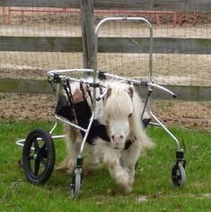 Disabled mini horse