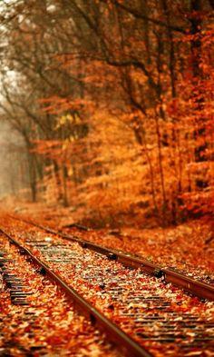 train tracks, railroad tracks, fall leaves, autumn leaves, color, looking forward, fall autumn, place, favorit season