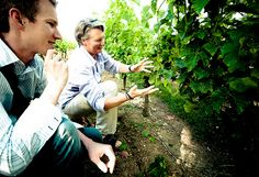 David and Sue in the Vineyard by lyzadanger, via Flickr