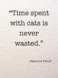 cats, anim, truth, true, time spent, kitti, quot, cat ladi, sigmund freud