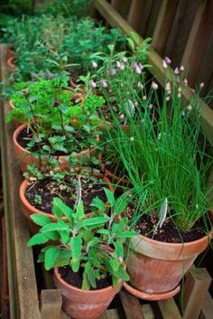 Growing herbs indoors - looking to do this myself!