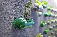 Garden Wall of 2-liter Soda Bottles