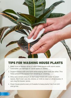 Keeping up your houseplants can be trickier than anticipated! Make sure you use these simple tips to keep your plants in great condition. #houseplants #planttips #plants #gardening