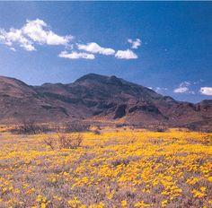 Franklin Mountains in El Paso