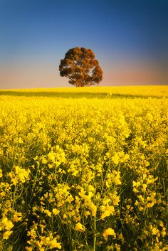 Calre-Spalding Road   South Australia
