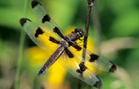 Beneficial Insects to have in your backyard, via @Birds & Blooms Magazine.