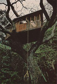 tree house tree house tree house