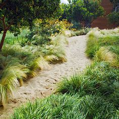 """grasses for the beach. A 6-inch-deep ribbon of fluffy pink sand meanders through beachy grasses (including Sesleria & Muhlenbergia) in this Malibu garden. Arbutus 'Marina' trees add shade while pale yellow 'Graham Thomas' roses and kangaroo paws fleck the """"dunes"""" with sunny color.    The best part? It's cheap and easy to create: Dig a channel 6 inches deep in the soil, then just pour in the sand. At a building-supply yard, you'll pay 52 to 62 for a ton—enough to cover about 43 square feet."""