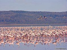 Kenya Lake System in the Great Rift Valley----BEEN HERE <3 BEAUTIFUL