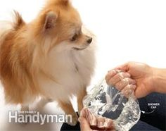Who knew? Use a shower cap as a portable water bowl :) #dogs #diy #healthydog