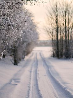 A Long Winter Road holiday, winter snow, country roads, season, winter wonderland, path, white christmas, winter scenes, the road