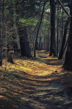 ✯ Peaceful Path
