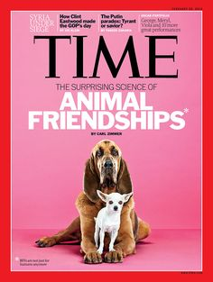 Time Magazine article about animal friendships