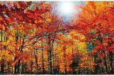 Jesienny las i inne widoki moga ozdbić twój ekran. Pobierz za darmo zdjęcia jako tapety na pulpit - wystarczy kliknąć w tę miniaturę