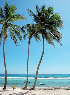 Tropical paradise,  Islamorada.  Florida Keys